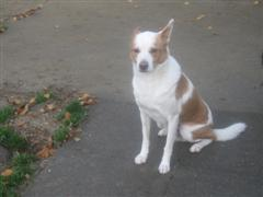 contrat adoption chien